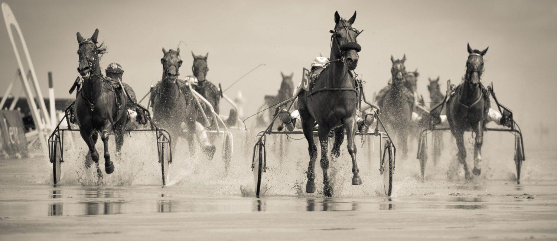 Stoneman Quarter Horses